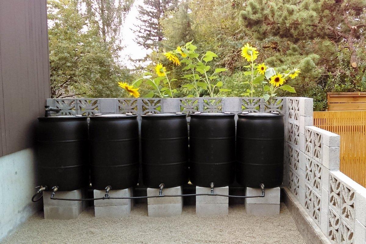 DIY rain barrel system guide