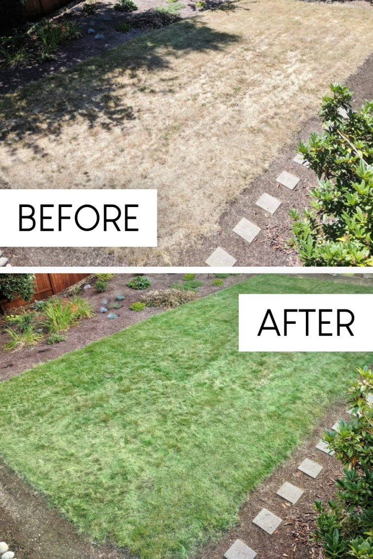Before and after painting lawn, from yellow lawn to green painted lawn