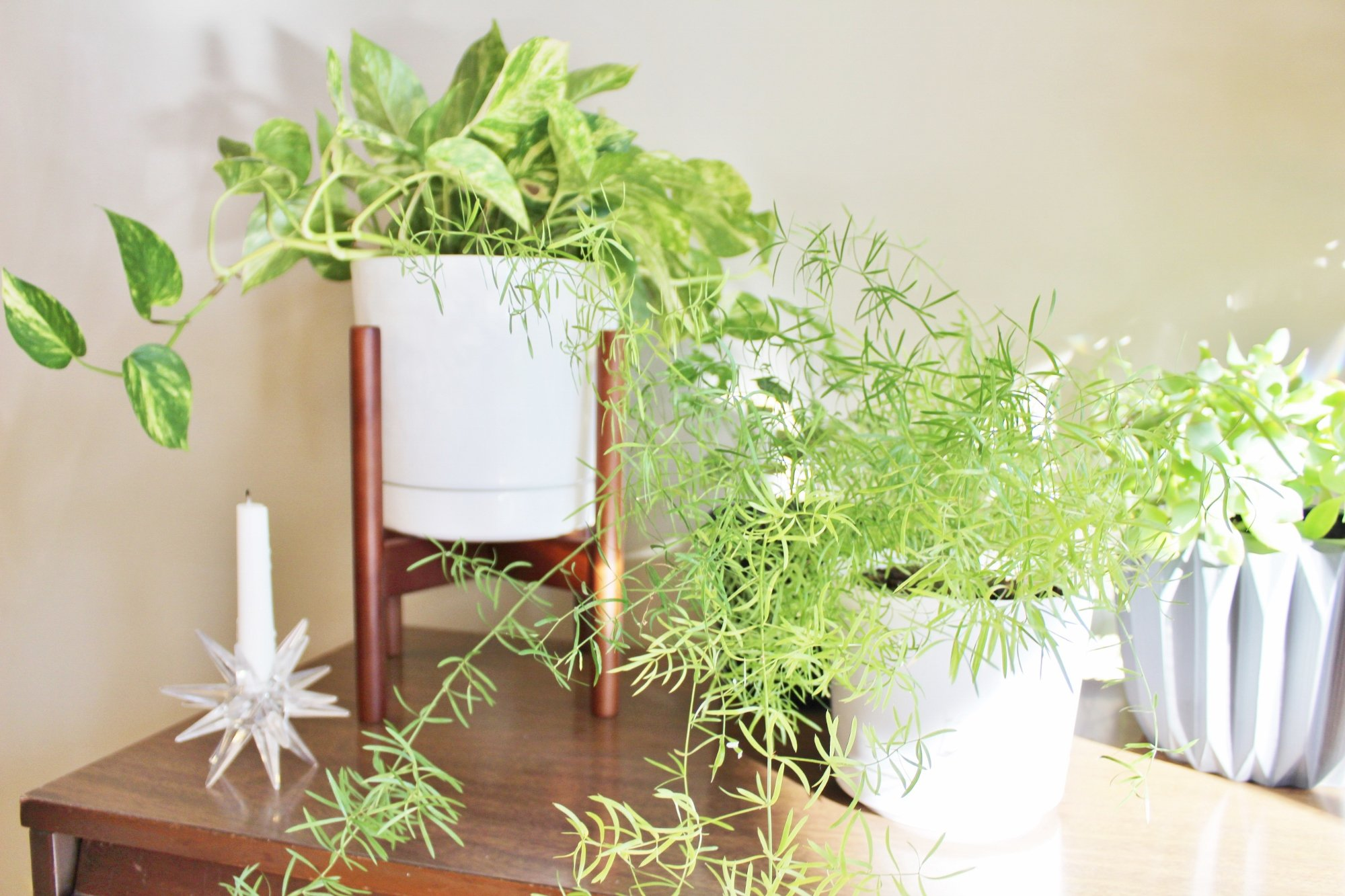Modern white and gray planters for houseplants