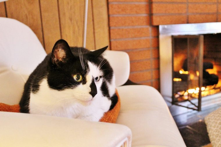 Cat relaxing in chair by fireplace with cozy hygge vibes