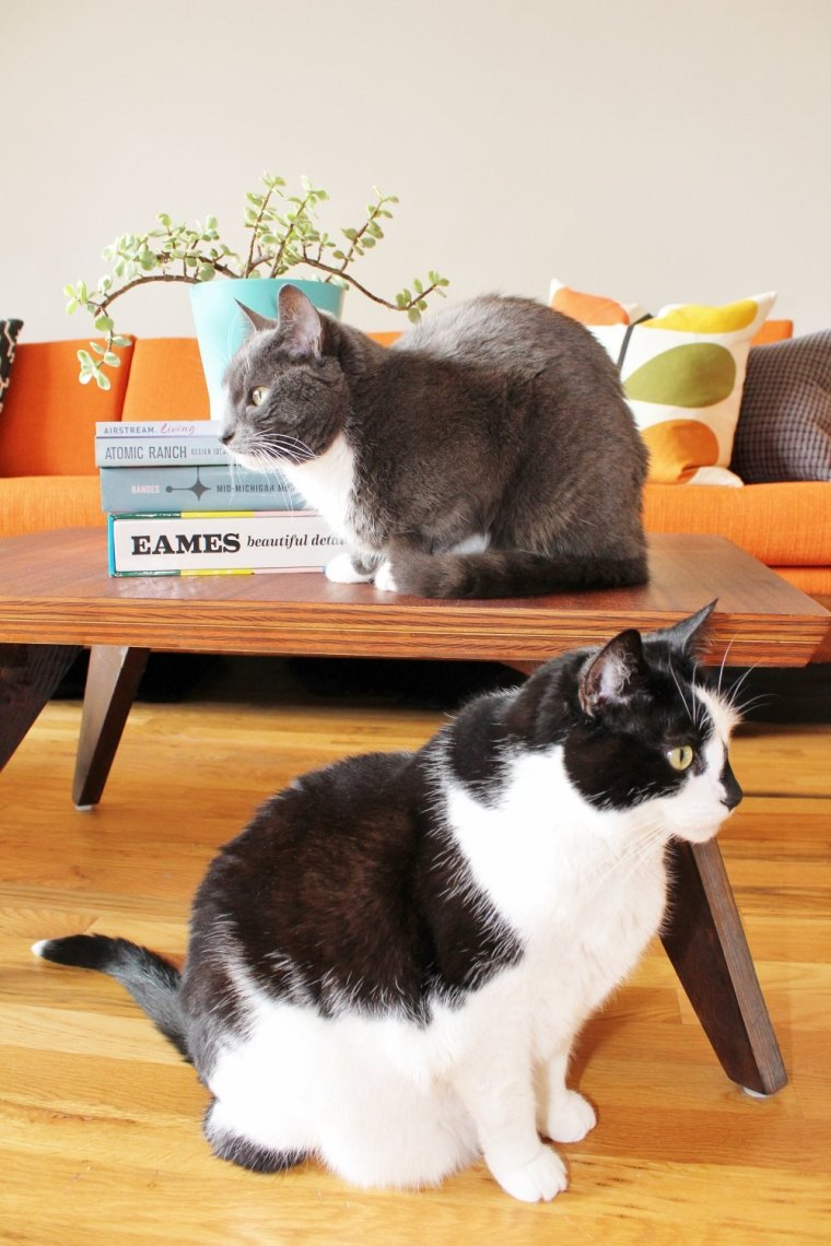 Mid-century modern coffee table books in retro living room with cats