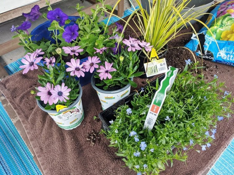 Thriller, filler and spiller plants for a hanging basket