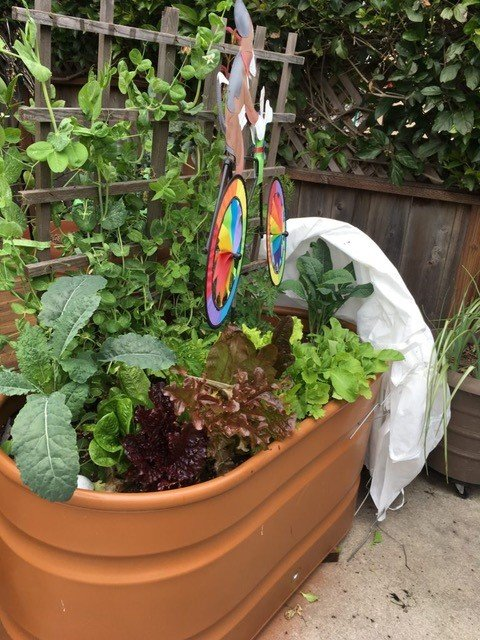 Container garden on the patio with trellis