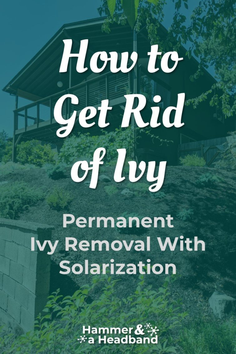 Permanent ivy removal with solarization