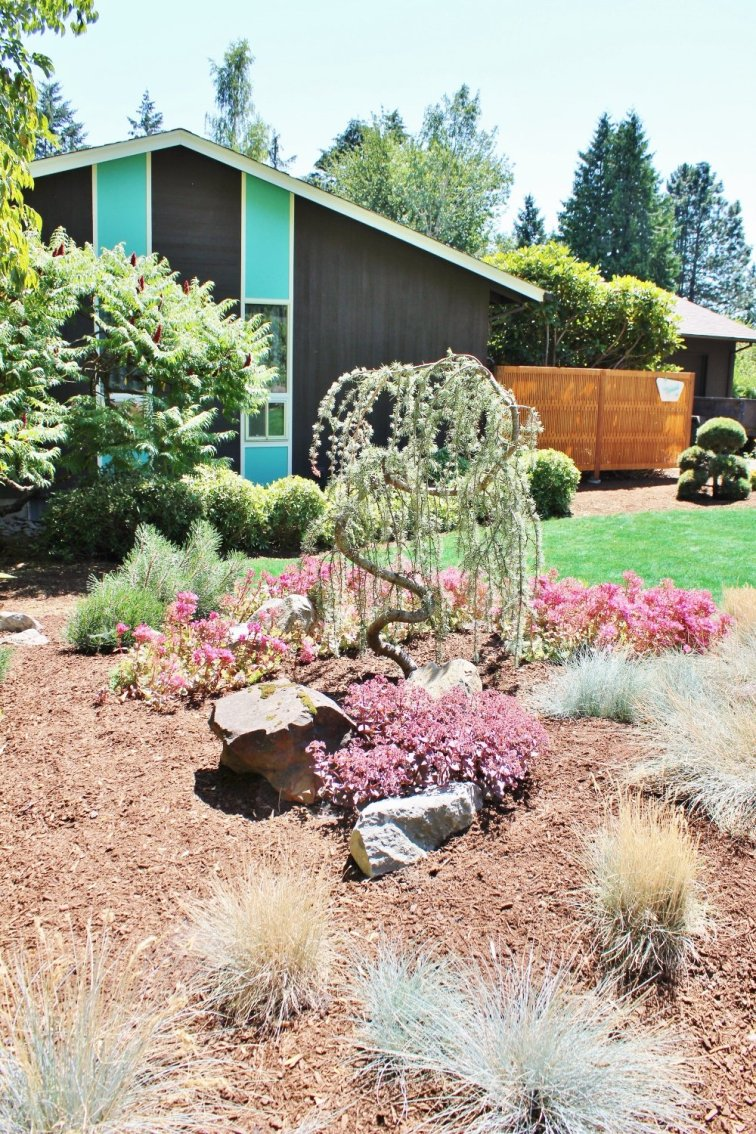Midcentury modern front yard landscaping with berm
