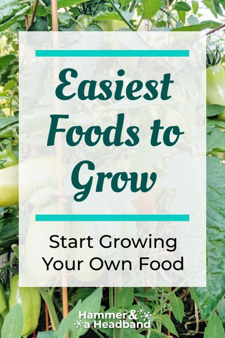 Easiest foods to grow