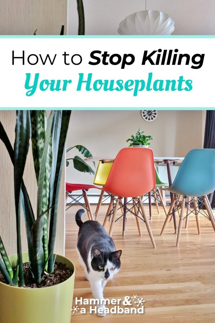 How to stop killing your houseplants