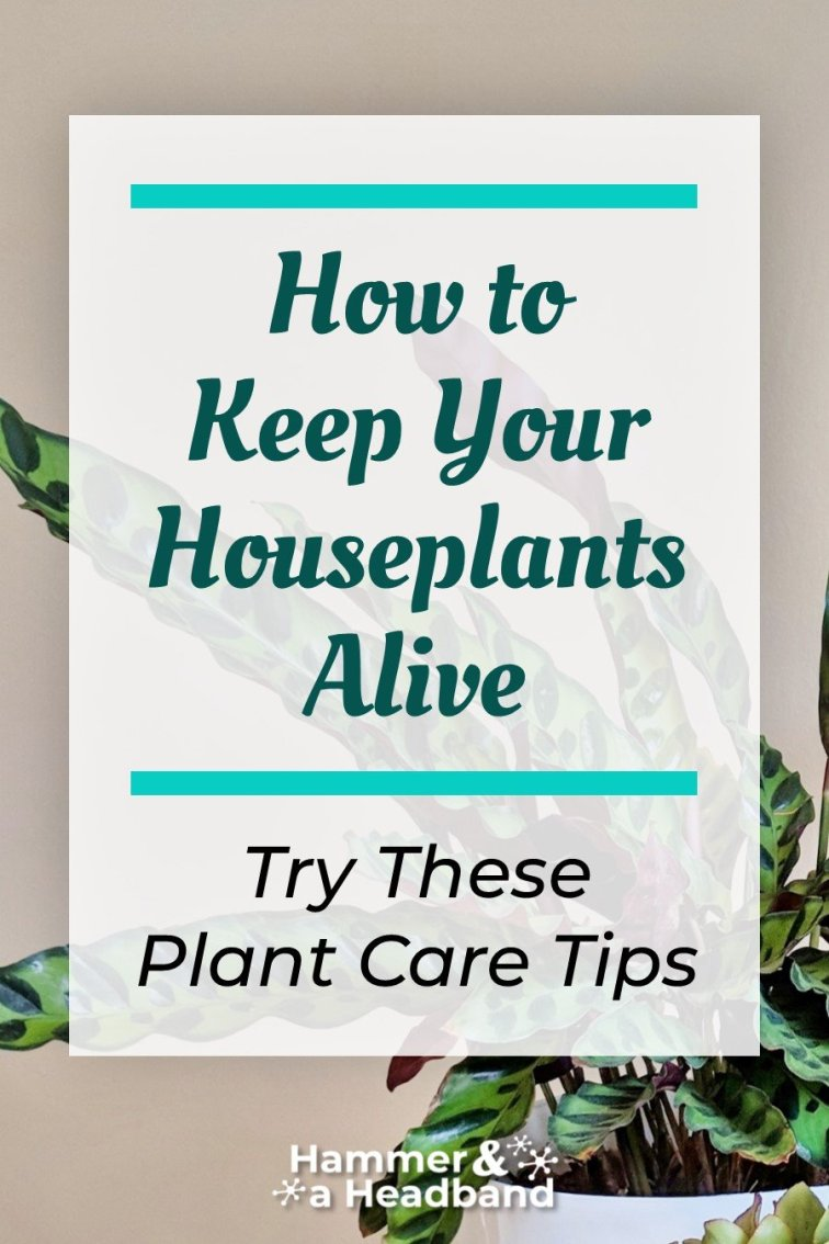 How to keep your houseplants alive - try these plant care tips