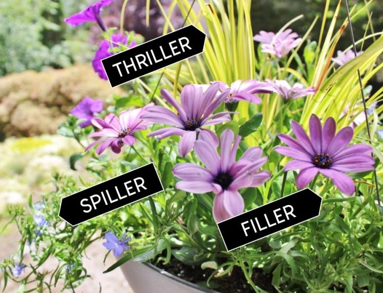 Thriller, filler, spiller - the easy formula for planting hanging baskets
