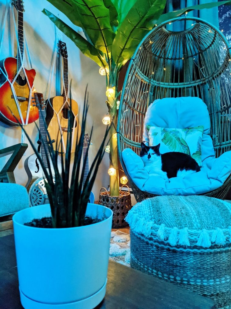 Charlie cat relaxing in wicker egg chair in the tiki bar