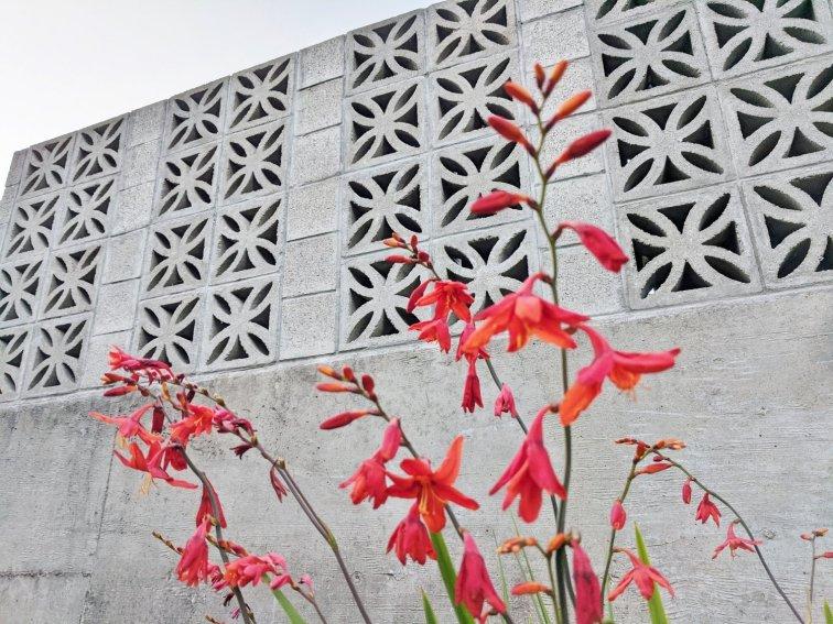 Breeze block wall in mid-century modern backyard