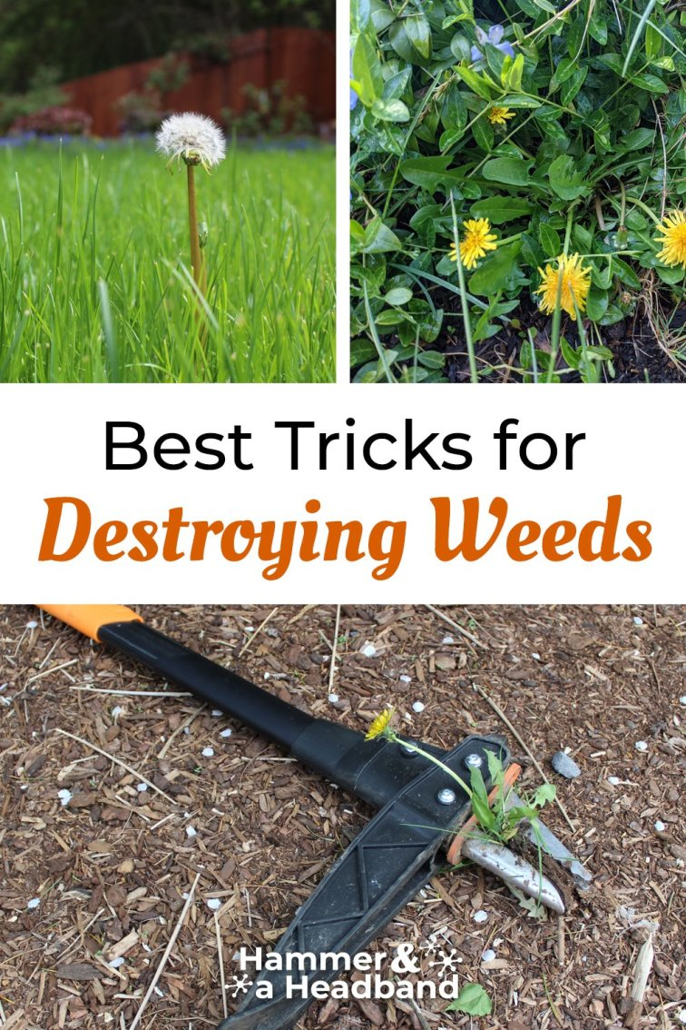 Best tricks for destroying weeds