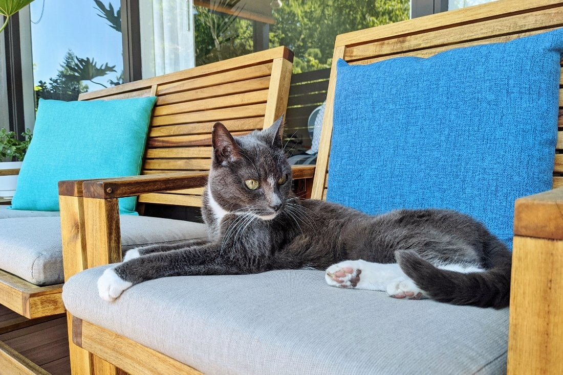 Jane cat relaxing on outdoor chair