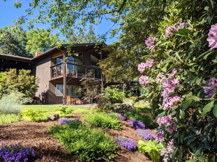 Flower garden slope landscaping with dappled shade