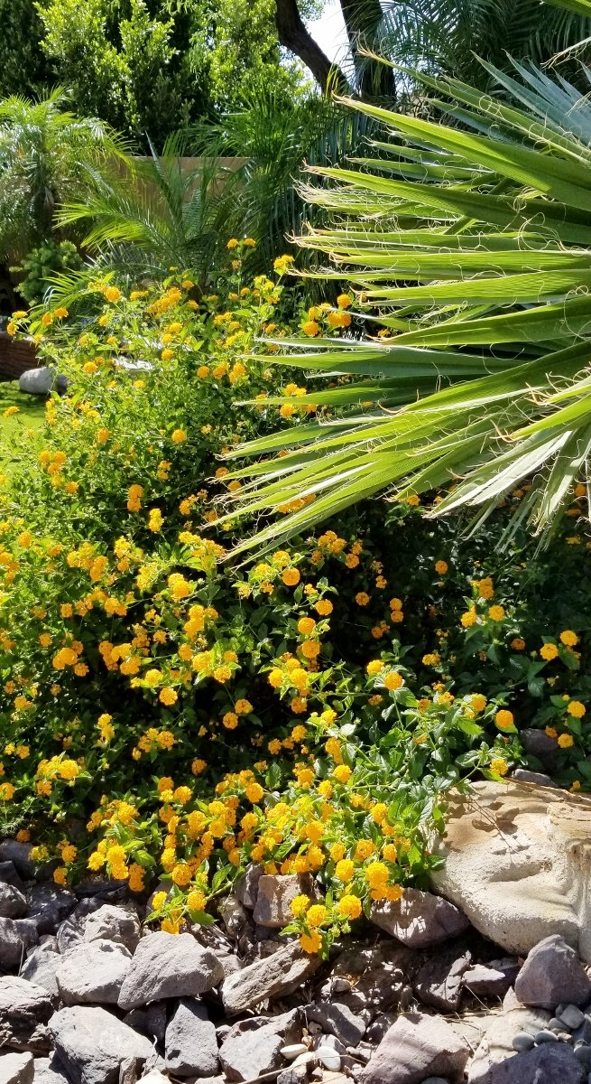Yellow flowers and fan palm growing in garden