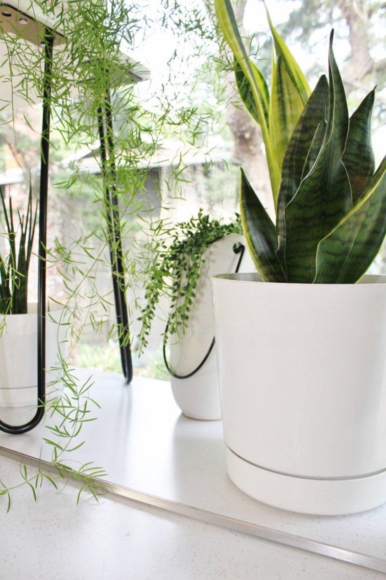 Houseplants in modern white planters in kitchen window