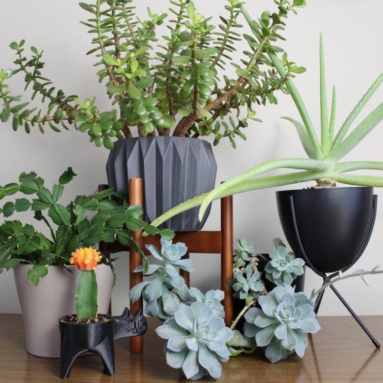 Succulent plants growing in modern planters indoors