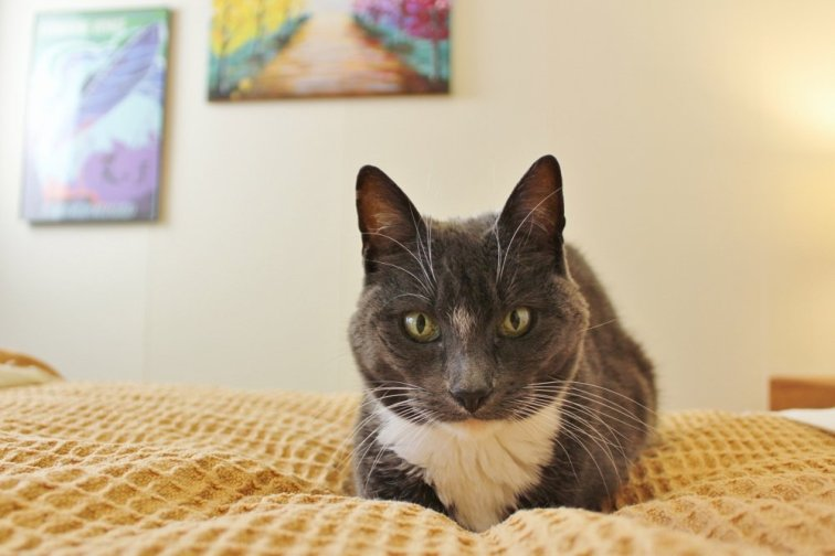 Cat on yellow bedding in travel-themed guest room