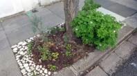 Guerrilla gardening W6