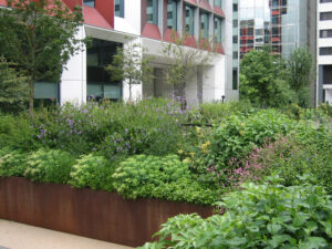 245 Hammersmith Road Landscaping