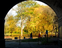 Under the tube bridge, Ravenscourt park