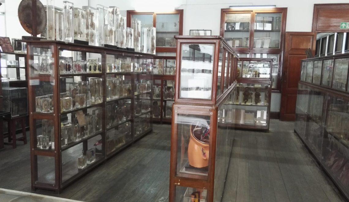 Siriraj Medical aka the Anatomy Museum