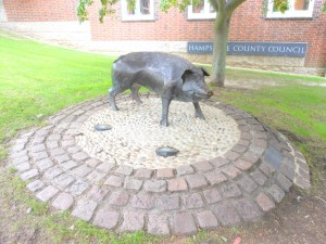 Hampshire Hog in Winchester