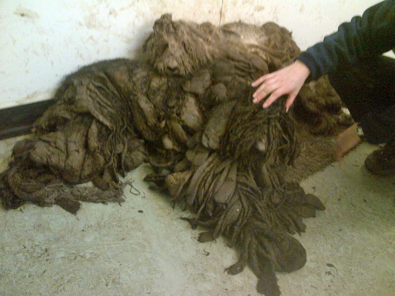 The dogs were found unable to see, walk or stand with severely matted fur.