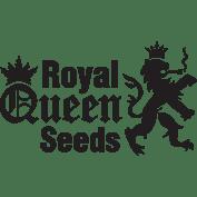 Royal Queen Seeds (BULK)