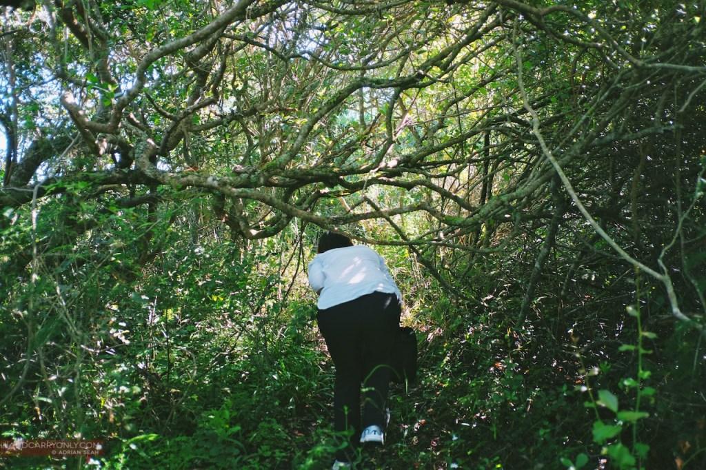 hiker bashing through bush