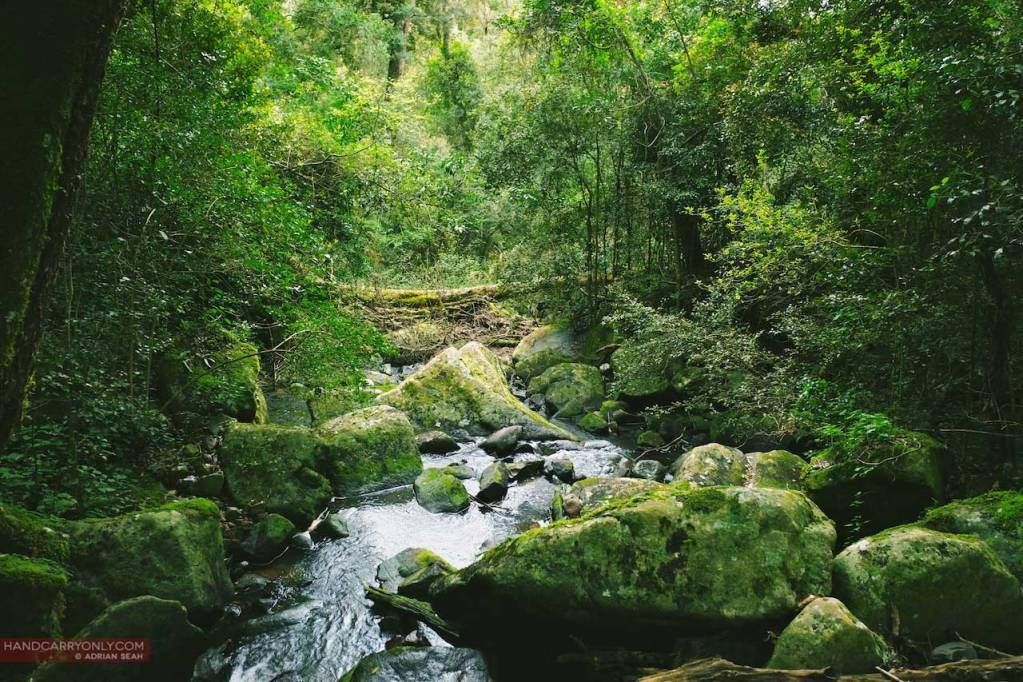 Hogback forest stream south africa
