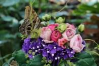 Fjärilar överallt