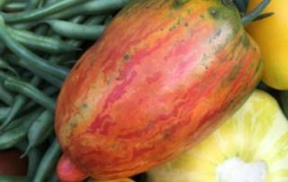 Tomato Squash Beans
