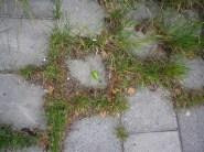 Mensch und Natur - Umeå