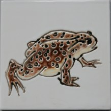 Common Toad tile
