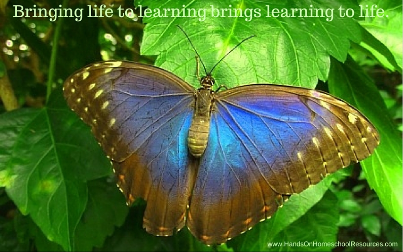 Life to Learning, Learning to Life
