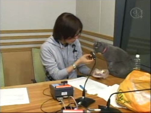 Hiroshi Kamiya nyanko sensei