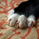 Tips for Keeping a Cat from Scratching Furniture