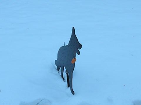 Black dog front