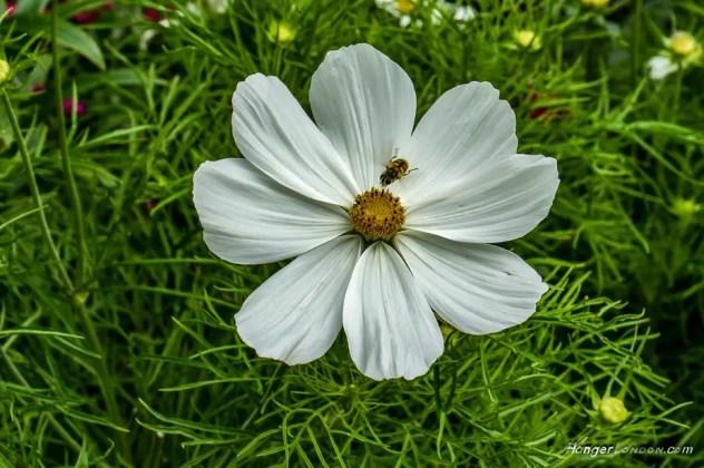 Princess Diana Kensington Palace garden flowers