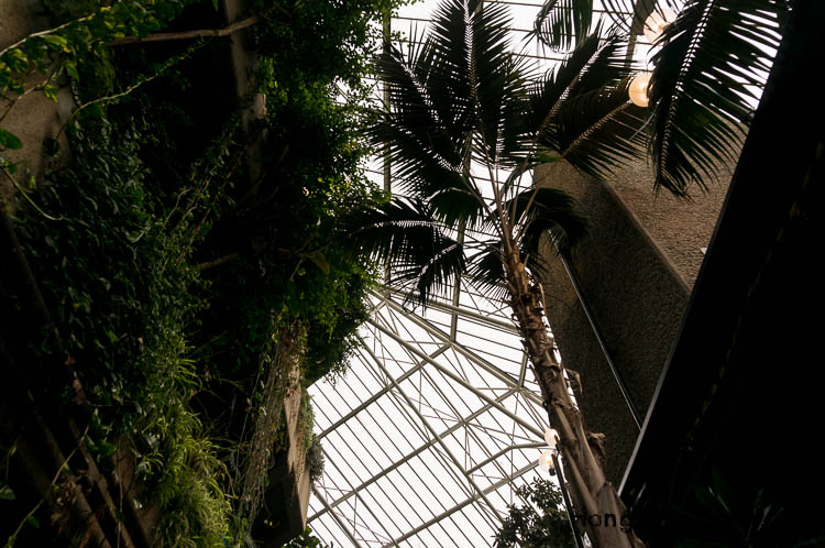 tall palm trees glass roof