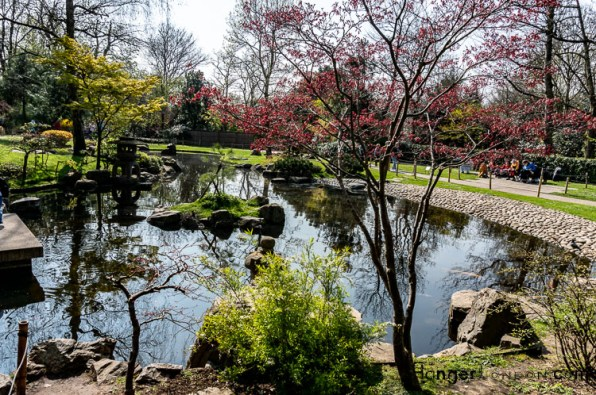 Kyoto Garden Holland park water trees, blossoms, fish tranquility