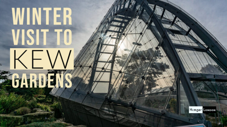 visit kew gardens in winter