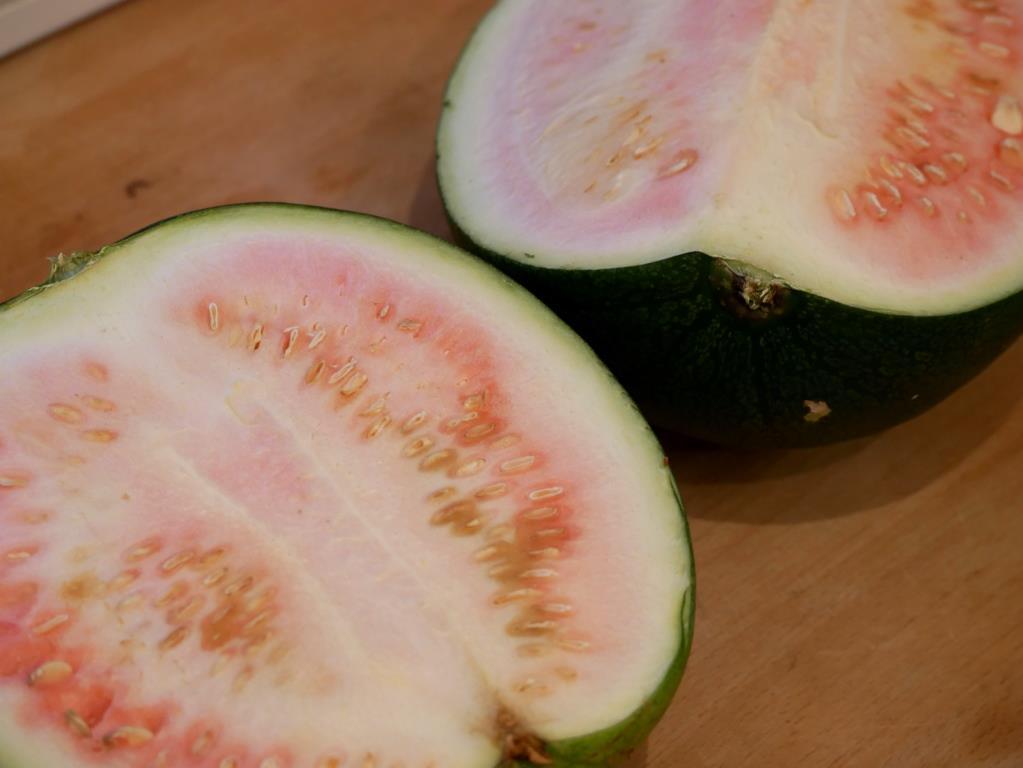Wassermelonen-Malheur
