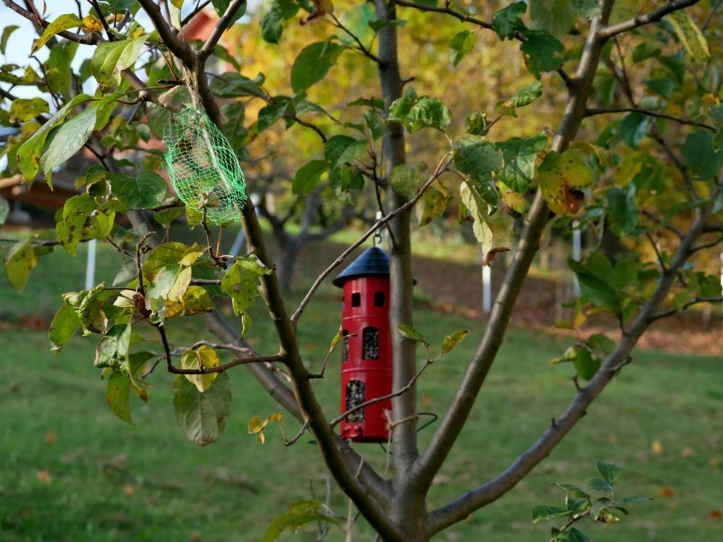 Die frechen Krähen haben schon wieder die Meisenknödel geraubt - Vogelfütterung im November