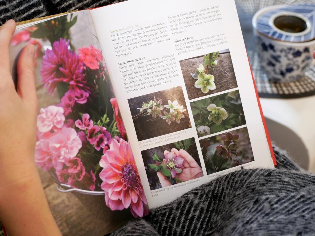 Bio Schnittblumen Vorstellung der Sorten