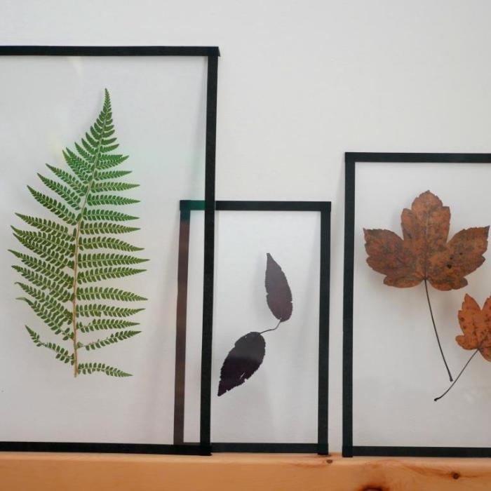 Pflanzenbilder aus gepressten getrockneten Pflanzenteilen selber machen