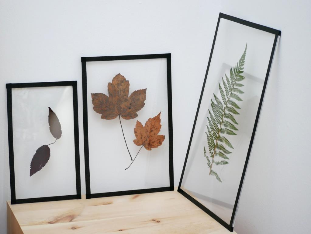Ihr könnt die Pflanzenbilder immer wieder unterschiedlich positionieren. Wenn ihr sie aufhängen wollt bestellt ihr die Plexiglasplatten am Besten mit vorgebohrten Löchern
