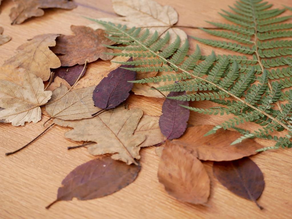 Getrocknete Herbstblätter und Farne für mein Pflanzenbild