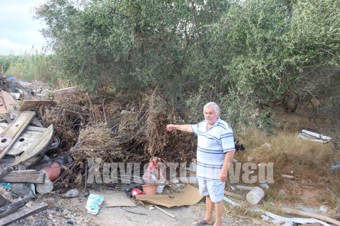 Ο Στέφανος Σαριδάκης δείχνει τα ξερά χόρτα κάτω από το ελαιόδεντρο